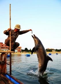 小嶝岛渔村:浪漫嬉海豚