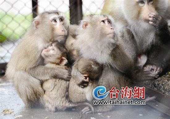 三两只大猴将幼崽紧紧地搂在怀里