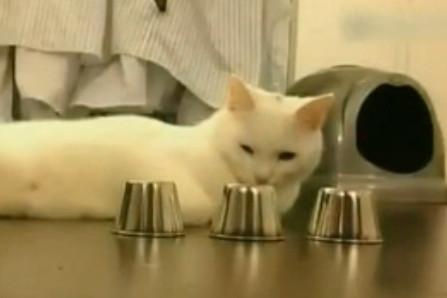 猫届赌圣惊人