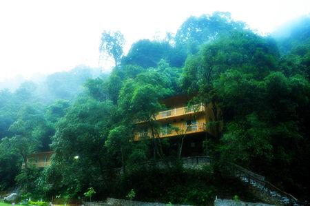 森林树屋风景图片