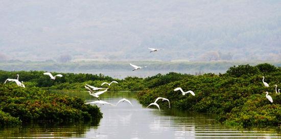 国际重要湿地 漳江口红树林