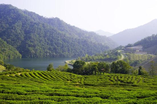 水上茶乡九鹏溪风景区位于漳平市南洋乡,是天台国家森林公园的核心
