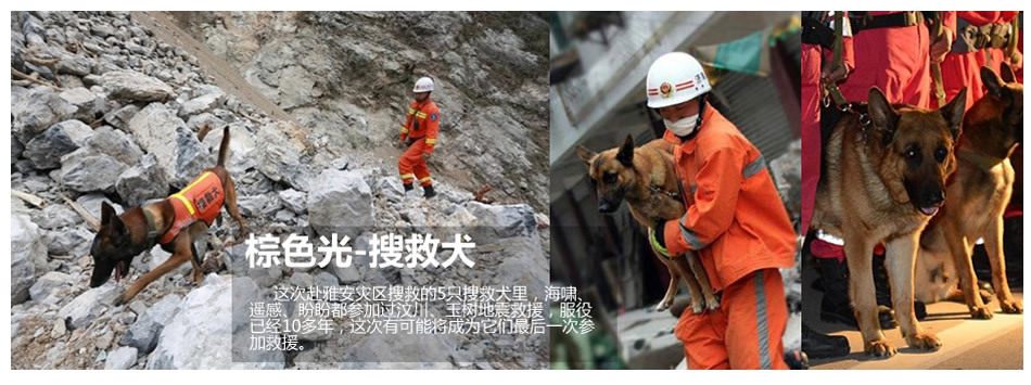 棕色光-搜救犬是地震中的搜救奇兵