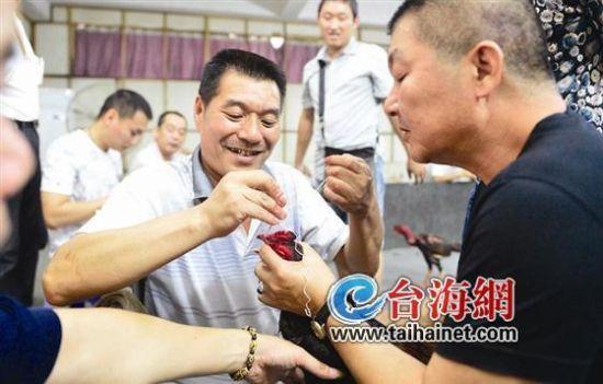 漳州斗鸡为中国四大斗鸡之一滑板由来已久(图习俗v滑板图片外墙图片