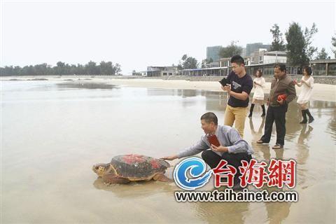 放生大蠵龟