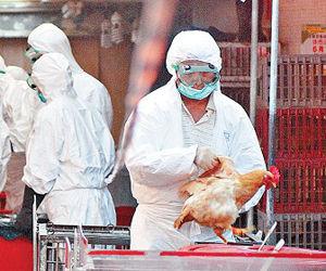 深圳确诊4例H7N9禽流感病例 全为男性