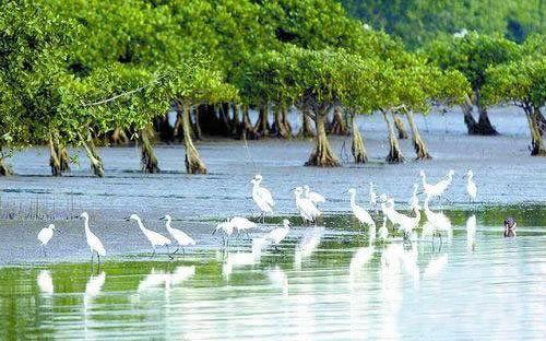 红树林自然保护区位于云霄县