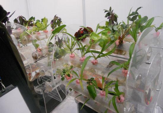 花卉怎么无土栽培-怎样养殖无土栽培植物