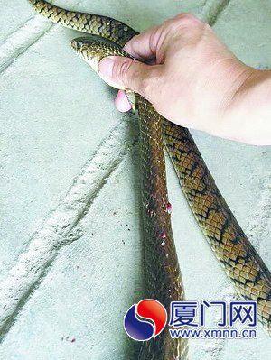 被咬死的蛇