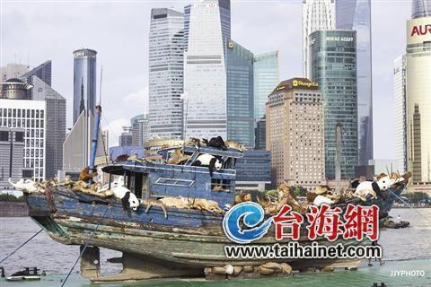 """""""方舟""""从泉州漂到上海"""