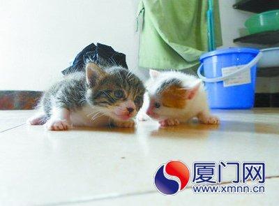 超萌可爱小猫崽睡觉