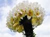 一株百合70朵花