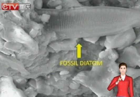 陨石片现生物化石