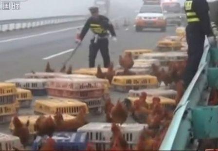 鸡仔高速路遛弯