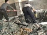 实拍福建工厂用脏臭碎皮料生产药用胶囊