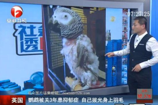 鹦鹉被关3年患抑郁症 自己扒光身上羽毛