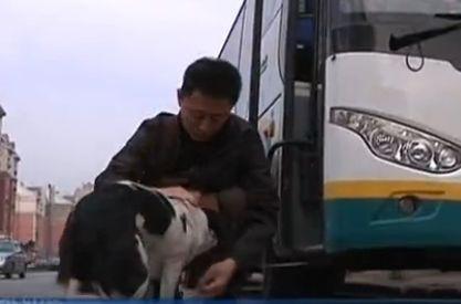 实拍流浪狗每天接送喂养恩人上下班