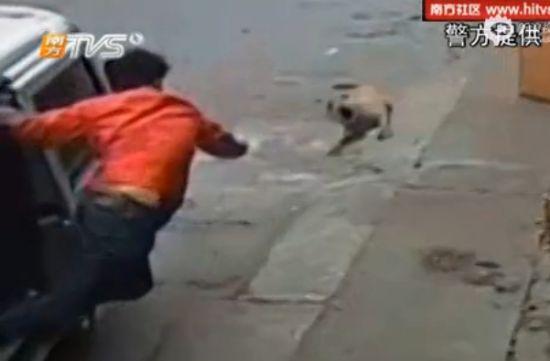 实拍偷狗贼5秒内套走狗 开车撞倒遛狗主人