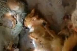 湖州捣毁跨省毒杀狗团伙 查获1600多条狗