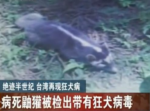 台湾再现绝迹54年的狂犬病毒